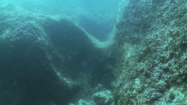 ds underwater reef / pag, island of pag, croatia - letterbox format stock videos and b-roll footage