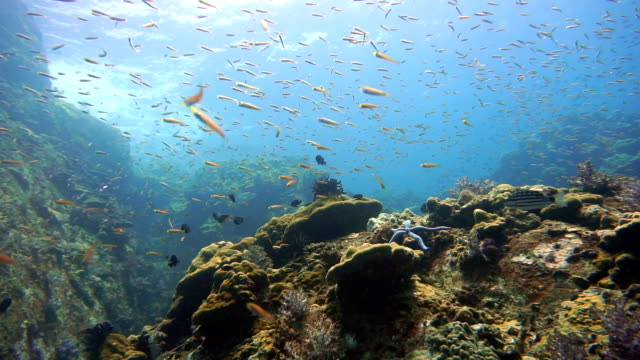 underwater reef teaming with fish - ko lanta stock videos & royalty-free footage