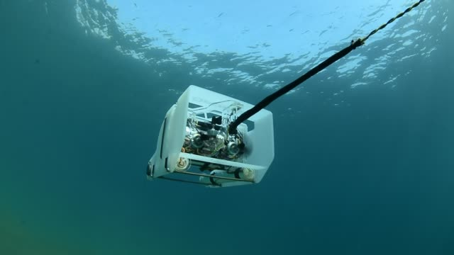 underwater rov. - sea life stock videos & royalty-free footage