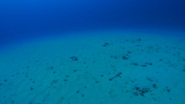underwater sand - mar stock videos & royalty-free footage