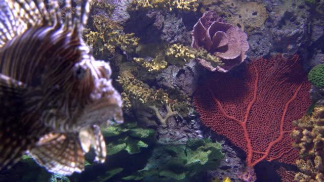 vídeos y material grabado en eventos de stock de underwater scene of the tropical coral reef - rascacio