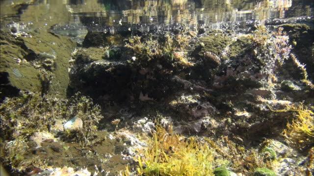 underwater scene of tidepool of seogwipo, jeju island, south korea - gezeitentümpel stock-videos und b-roll-filmmaterial