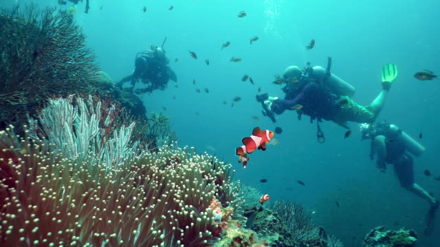 underwater scuba diver environmentalists removing fishing net pollution from a coral reef - aqualung diving equipment stock videos & royalty-free footage