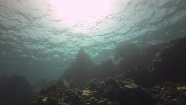 underwater: scuba diver swimming over coral reef - distrust stock videos & royalty-free footage