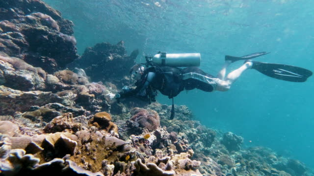 underwater scuba diver taking photographs of coral and tropical fish - ross sea stock videos & royalty-free footage