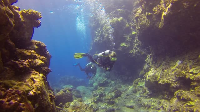 underwater: scuba divers swimming in among amazing coral reef - scuba diving stock videos & royalty-free footage