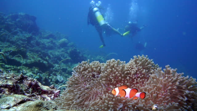 stockvideo's en b-roll-footage met onderwater scuba duikers met anemoonvis (amphiprion ocellaris) - clownvis