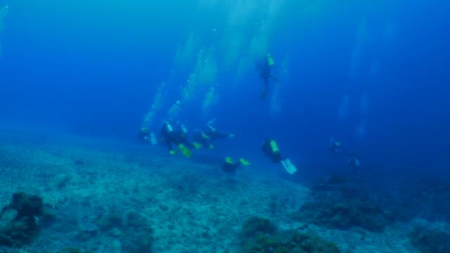 underwater dykning, fritidsaktivitet, taiwan - dykarperspektiv bildbanksvideor och videomaterial från bakom kulisserna
