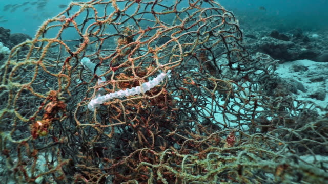 underwater sea cucumber trapped in discarded ghost net fishing gear - fishing net stock videos & royalty-free footage