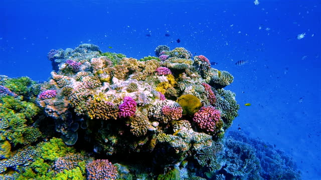 Underwater sea life on beautiful coral reef with lot of tropical Fish on Red Sea nearby Marsa Alam