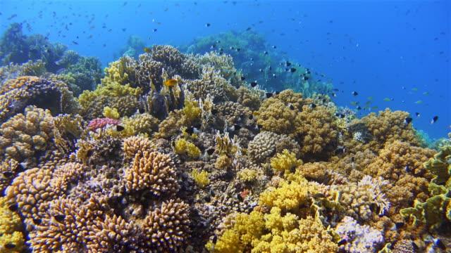 4k unterwasser meerestiere auf korallenriff mit vielen tropischen fischen / rotes meer - riff stock-videos und b-roll-filmmaterial