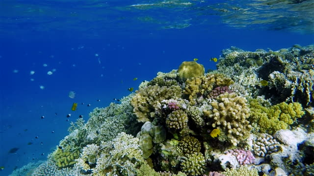 Underwater sea life on Coral reef with tropical Fish / Red Sea