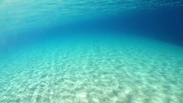 unterwasser-meeresraum und fische - seicht stock-videos und b-roll-filmmaterial