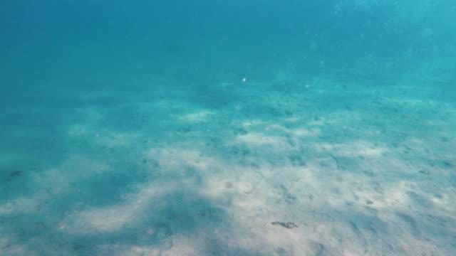 underwater sea - earth goddess stock videos & royalty-free footage