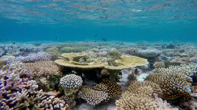 vidéos et rushes de vie marine sur le récif de corail sous-marine - récif corallien
