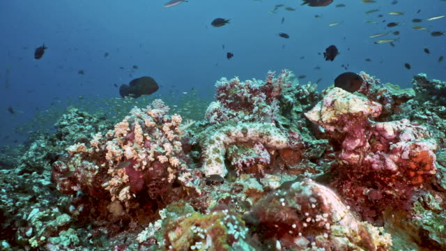 underwater seascape of coral reef containing abundant life - glass fish stock videos & royalty-free footage