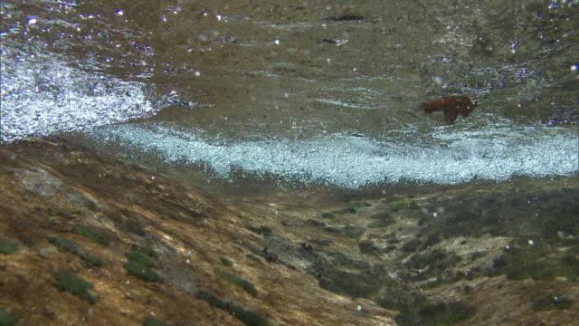 Underwater shot; Clear, clean stream flowing down the Omogo Gorge.