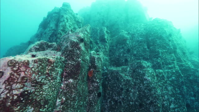underwater shot; dolly shot of the underwater columnar joints off the coast of the shakotan peninsula, hokkaido, japan. - natural column stock videos and b-roll footage
