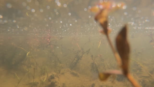 underwater shot in pond on rewilding farmland project in west sussex, which encourages wildlife back onto agricultural land - pond stock videos & royalty-free footage