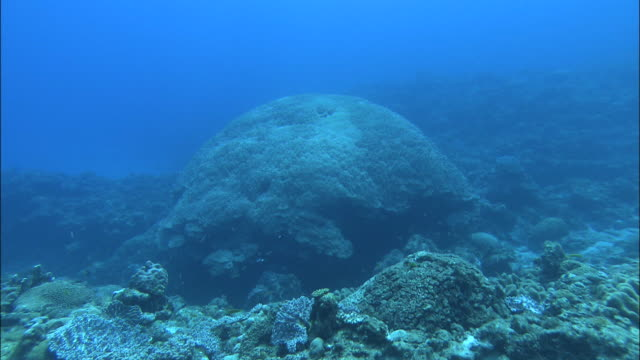 stockvideo's en b-roll-footage met underwater shot of a coral reef off kikai island,kagoshima,japan - polyp corals