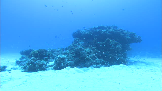 Underwater shot of a coral reef off Kikai Island,Kagoshima,Japan