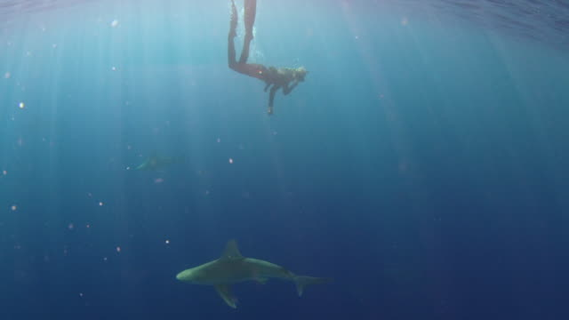 Underwater shot of a girl deep diving into a school of sharks