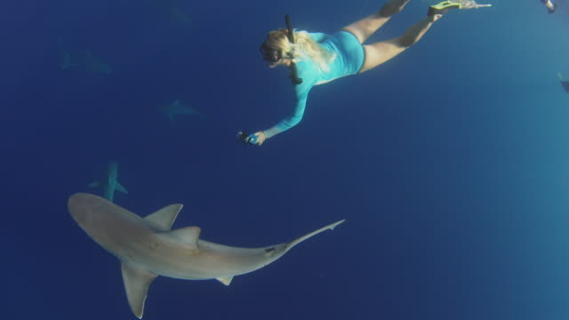 underwater shot of a girl following close behind a galapagos shark with a gopro - tiergruppe stock-videos und b-roll-filmmaterial