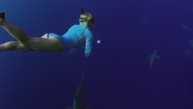 underwater shot of a girl looking around while swimming through a school of sharks - turtle bay hawaii stock videos and b-roll footage