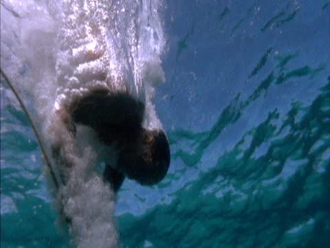 underwater shot of a man diving into the sea, using an anchor to pull him to the seabed. - badbyxor bildbanksvideor och videomaterial från bakom kulisserna