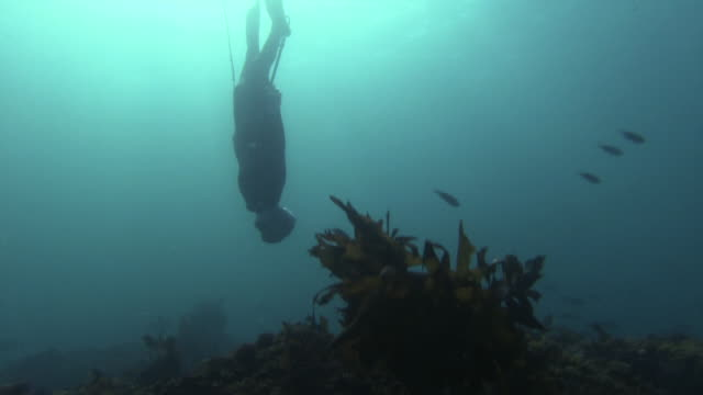 underwater shot of an ama diver diving deeper into the sea with a harpoon in her hand wide angle view of her diving into the water sun shining... - harpoon stock videos and b-roll footage