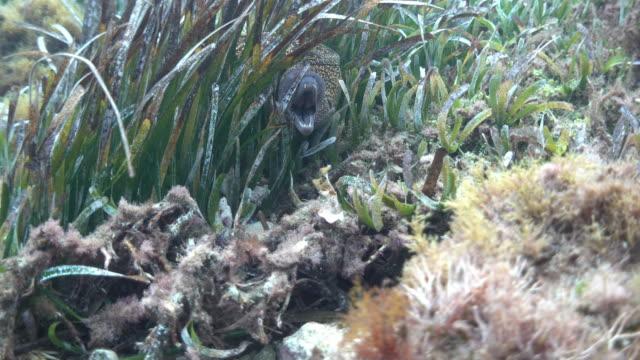 海草のウナギの水中ショット - シーグラス点の映像素材/bロール