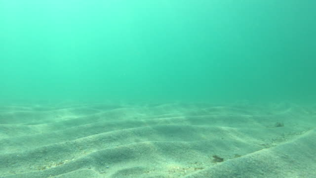 underwater shot of crystal clear waters and sand - sea robin stock videos & royalty-free footage