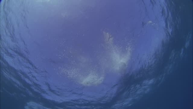 SLO MO WS LA Underwater shot of dolphins jumping out of sea / Moorea, Tahiti, French Polynesia