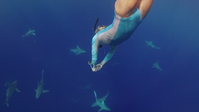 underwater shot of girl deep diving into a school of sharks - shark stock videos & royalty-free footage