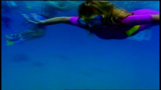vídeos de stock, filmes e b-roll de underwater shot of girl in pink wetsuit swimming past camera in maui hawaii - diving suit