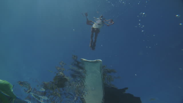 vídeos de stock e filmes b-roll de ws underwater shot of girl jumping into a swimming pool - gesticular