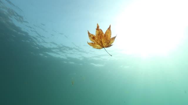 Underwater shot of Lake Shikotsu
