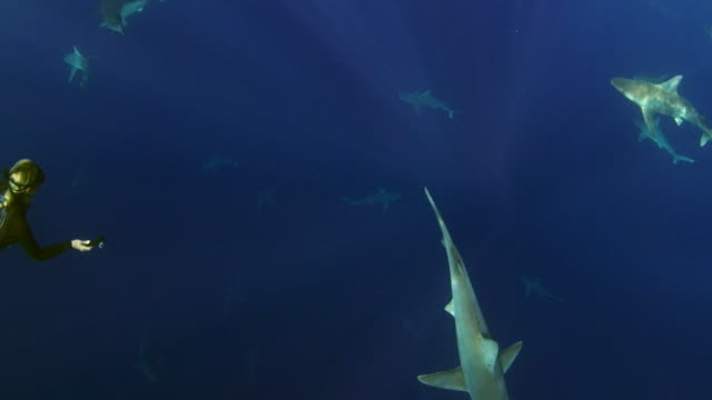 Underwater shot of light filter through the water revealing a school of sharks