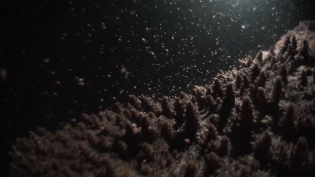 stockvideo's en b-roll-footage met underwater shot of spawning by a species of small-polyp stony coral (genus acropora). - polyp corals