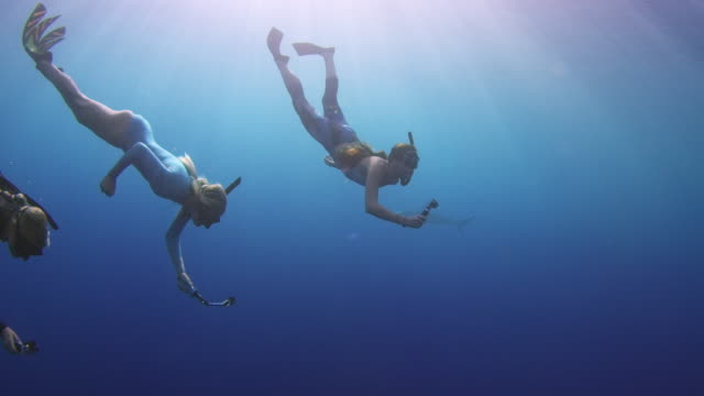 underwater shot of three girls free diving into a school of sharks - attività del fine settimana video stock e b–roll