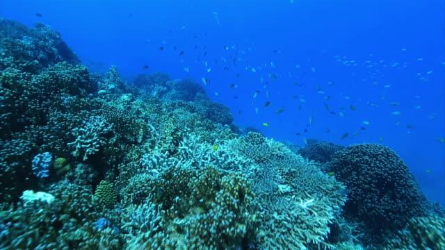 Underwater shot of various corals
