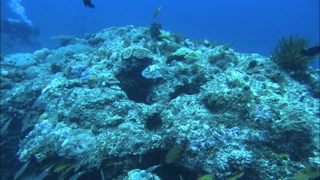 underwater shot off kikai island,kagoshima,japan - butterflyfish stock videos & royalty-free footage