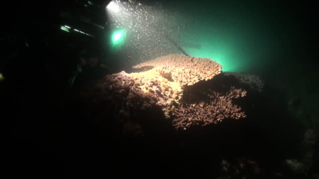 stockvideo's en b-roll-footage met underwater shot, showing the filming of coral spawning (prior to the spawning). - polyp corals