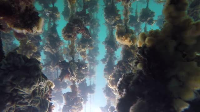 underwater shot taken under anamizu bay - turquoise coloured stock videos and b-roll footage