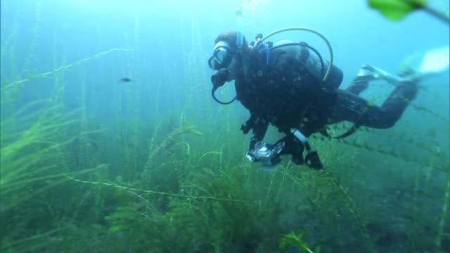 underwater shots of lake shikotsu - underwater camera stock videos & royalty-free footage