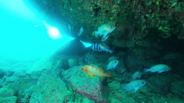 underwater shots taken off the coast of akita - below stock videos & royalty-free footage