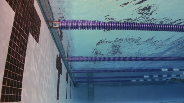 slo mo. underwater side view of professional swimmers racing freestyle and touching the wall at the end of the swimming lane during a swim meet in an indoor olympic sized swimming pool - competitive sport stock videos & royalty-free footage