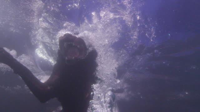 underwater slomo td ms labrador dog jumps into water and dives underwater - diving into water stock videos & royalty-free footage