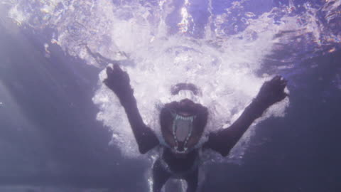 underwater slomo la ms labrador dog jumps into water with mouth open - tamdjur bildbanksvideor och videomaterial från bakom kulisserna