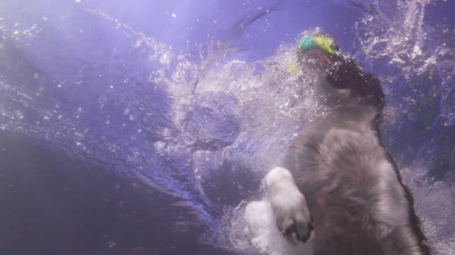 underwater slomo la ms spaniel dog jumps into water to catch ball - swimming stock videos & royalty-free footage